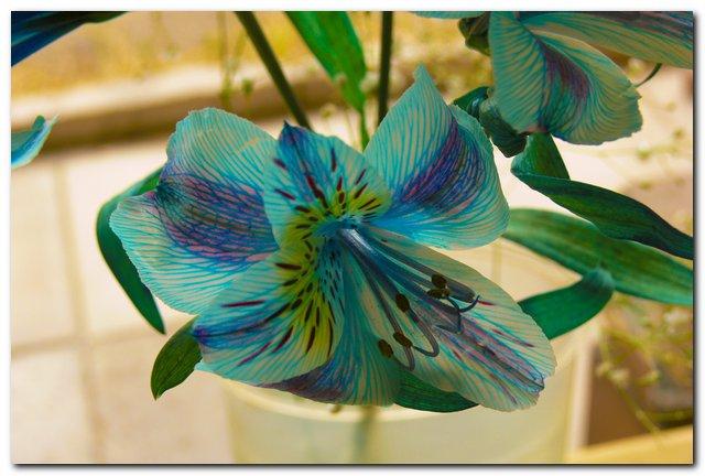 Jardineria plantas y flores for Jardineria y plantas
