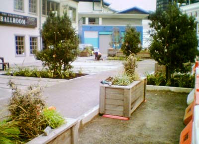 Planting at Kumutoto
