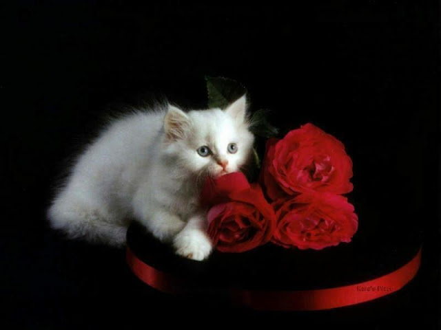 Gatos lindos para decoupage