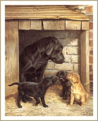 cachorros lindos