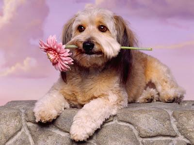 cachorros lindos - decoupage