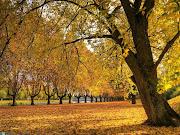 Paisagens tranquilas pro seu desktop (golden autumn )