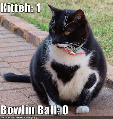 funny-pictures-bowling-ball-cat.jpg