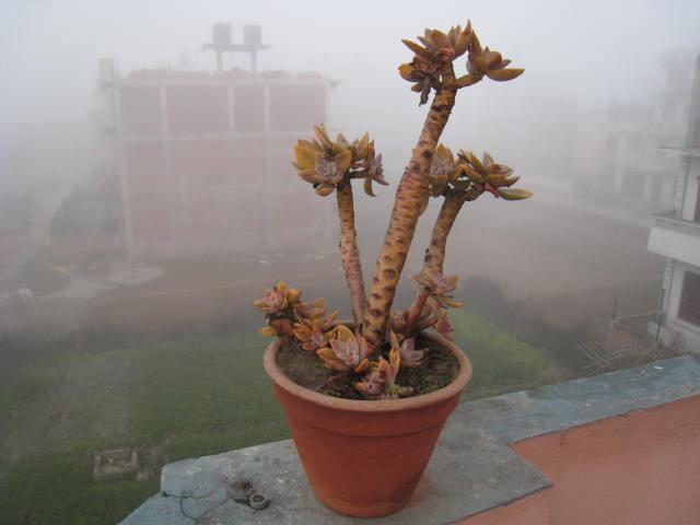 ネパールの朝ってこんなに寒い!