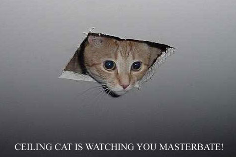 LOLCATS Ceiling_cat1