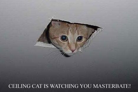 ceiling_cat1.jpg