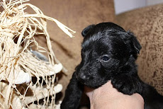 One from Bellas first litter