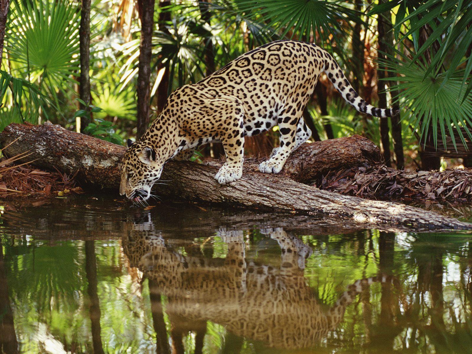 http://4.bp.blogspot.com/_Y8dVgrlzuG0/S9d_27Y36EI/AAAAAAAAHqw/iGTwUtni5es/s1600/animals+2.jpg