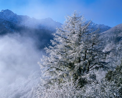 desktop wallpaper nature winter. wallpapers nature winter.