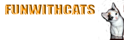 Kitten Wallpaper