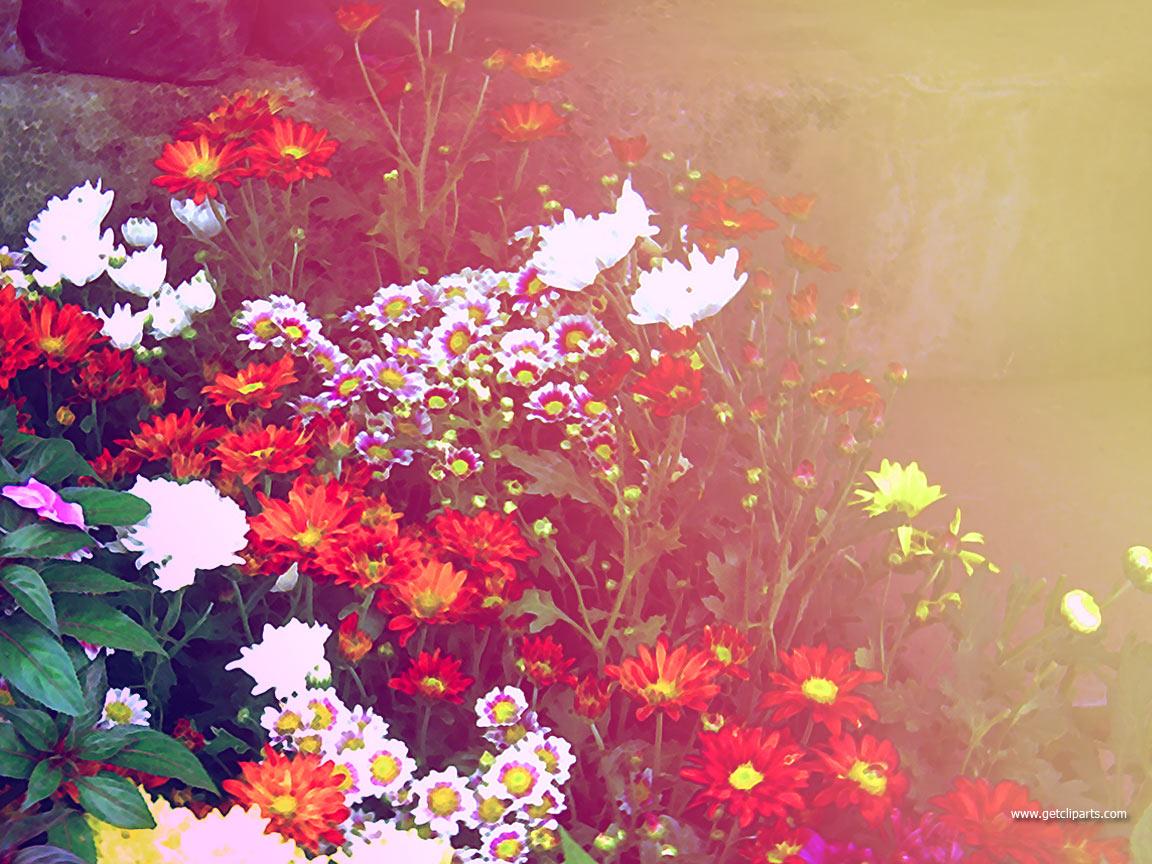 Wedding Flowers: Flowers Desktop Background
