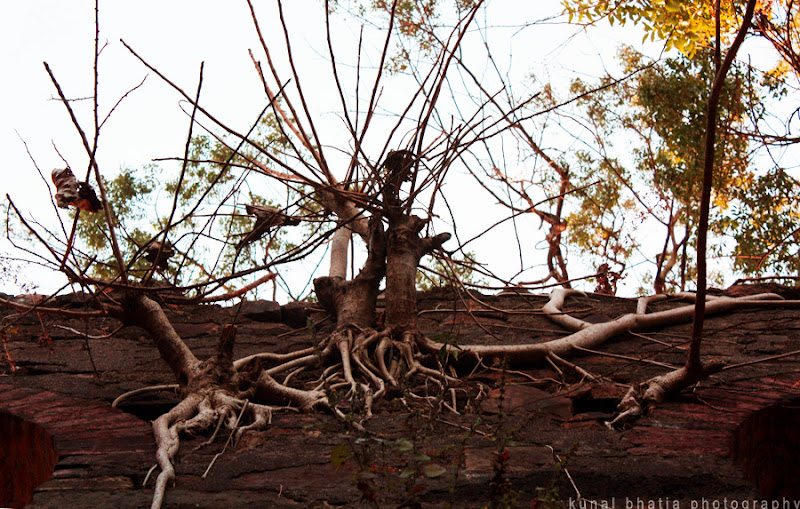 trees and crumbling ruins at vasai fort in mumbai by kunal bhatia
