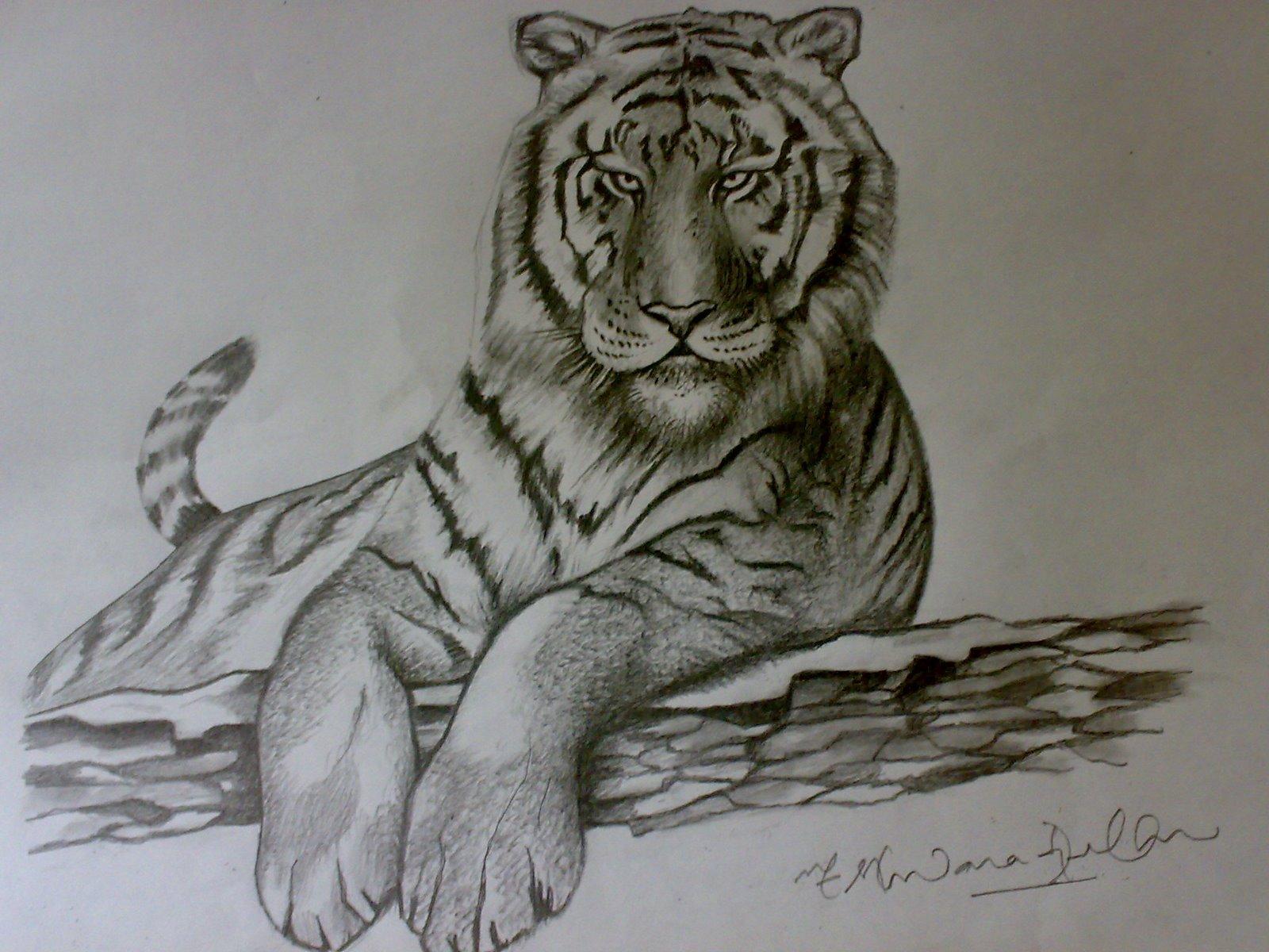 Ferrocious Feline – Tiger Claw – Lion – Animal Drawing ...
