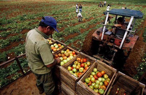 Agricultura en La Actualidad: