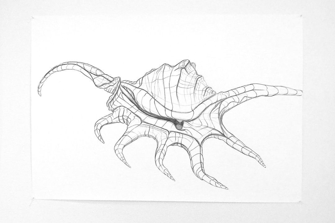 Contour Line Drawing Shell : Solliedesign the posting in gallery