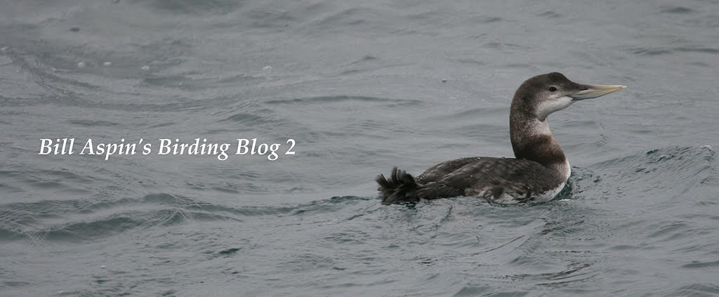 Bill Aspin's Birding Blog 2