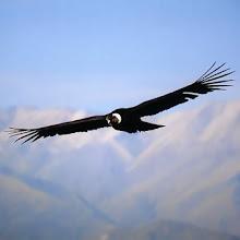 Desde las alturas, se otea mejor el horizonte; se puede enfocar integralmente nuestro entorno...