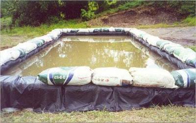 วิธีการเลี้ยงกุ้งฝอยในบ่อพลาสติก