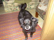 Erin, a 30 pound black dog