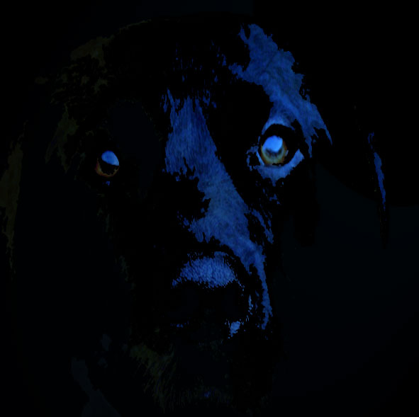 black Dog ghost