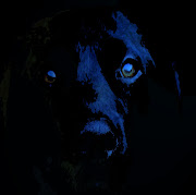 . black Dog ghost .