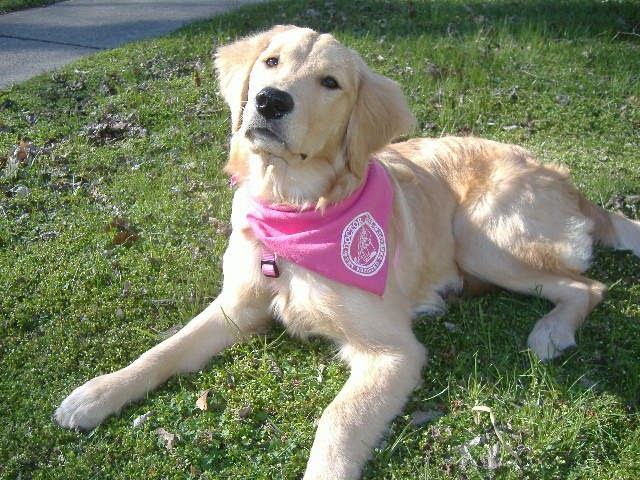 How Much Is A Trained Psychiatric Service Dog
