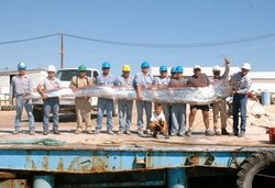 Oarfish - The Loch Ness Monster?