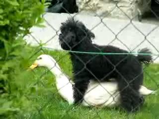 公園之狼小黑狗性侵小白鴨
