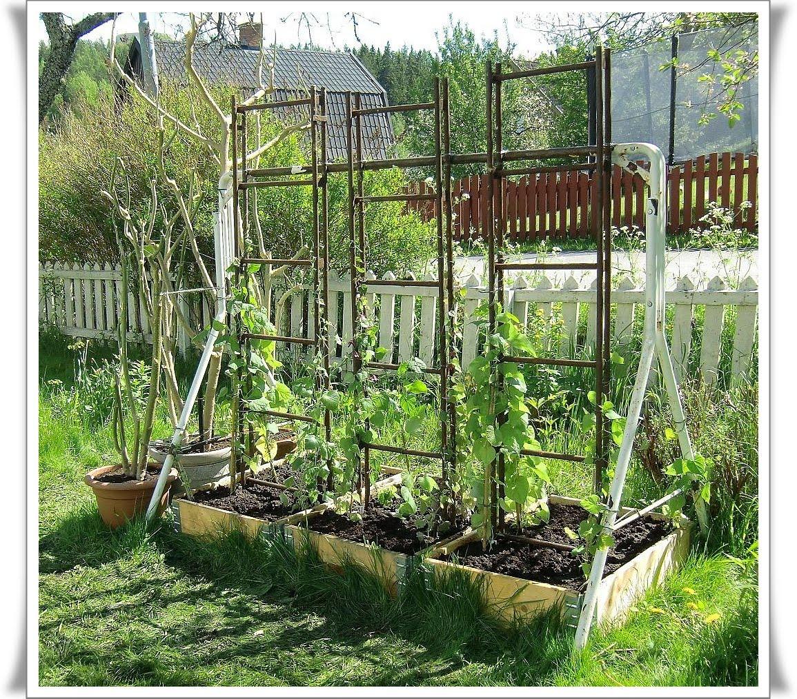 Blomster: Den gamla hammockställningen har fått stegar och ...