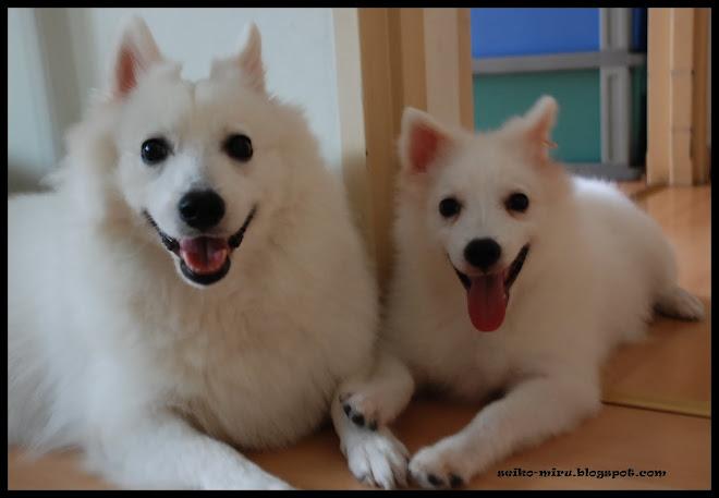 小白犬日记