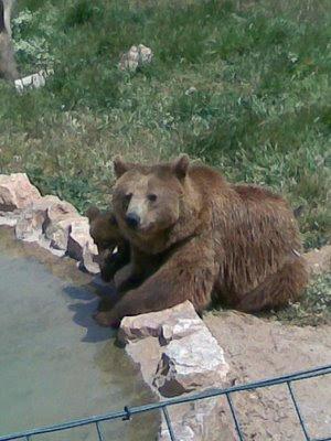 Αρκουδάκια 1