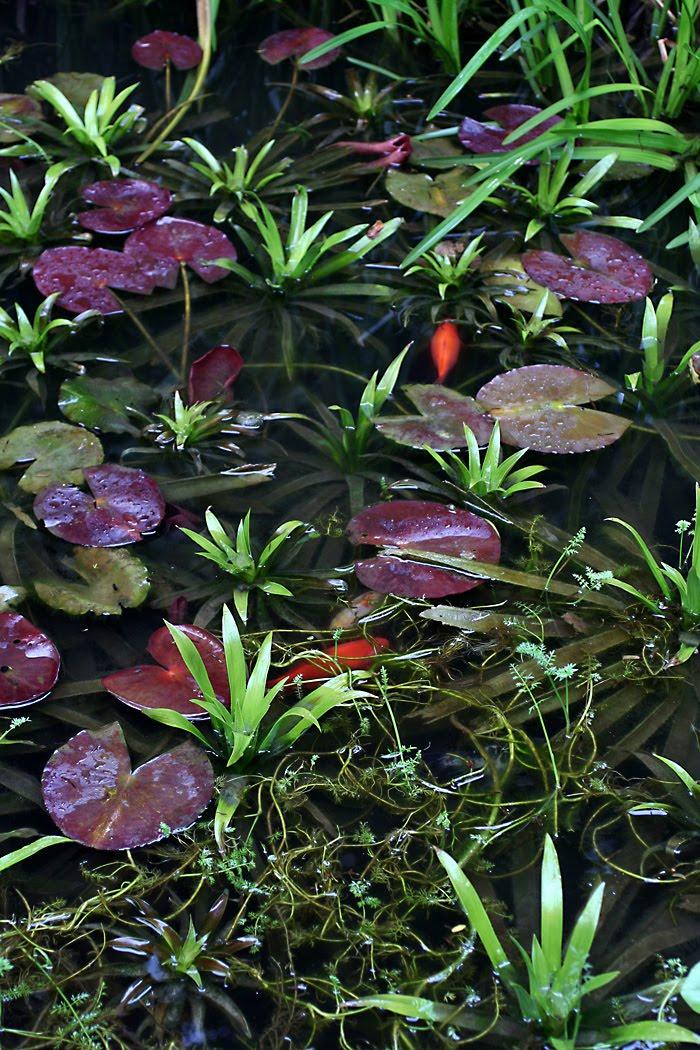 Wildwuchs unter aufsicht allerlei im wasser for Teich mit fischen