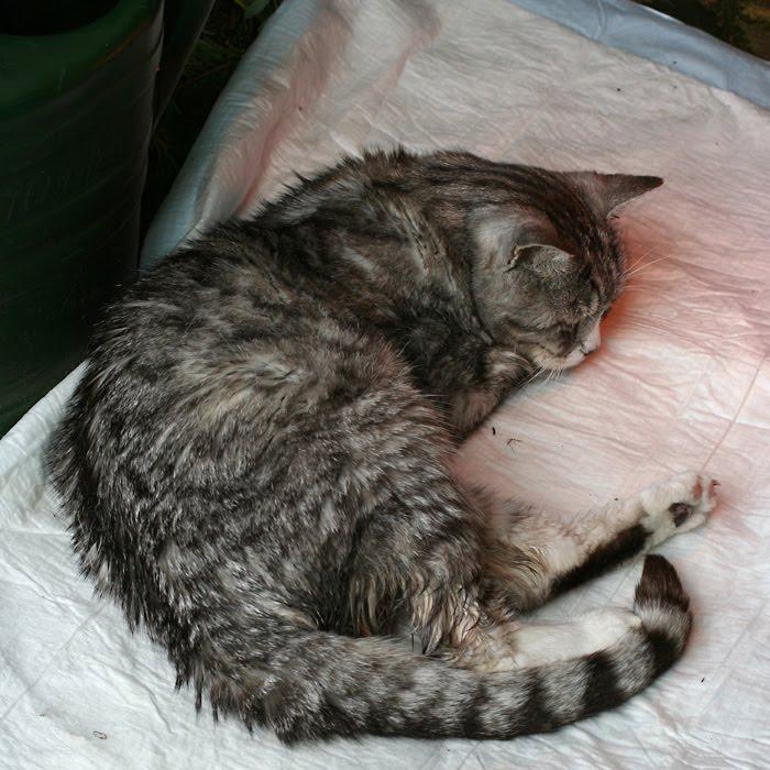 maus allegra andere katzen zuerst ein paar fotos. Black Bedroom Furniture Sets. Home Design Ideas
