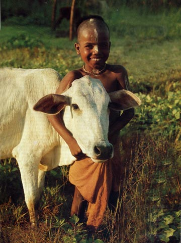 Brahmin Boy with Cow