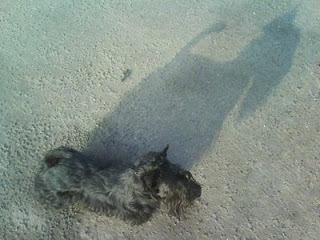 Кибья тень