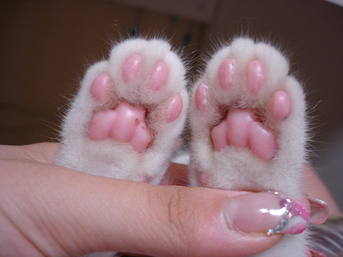 What Are The Beans On Cat S Feet