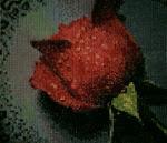 Мои работы - Роза в подарок