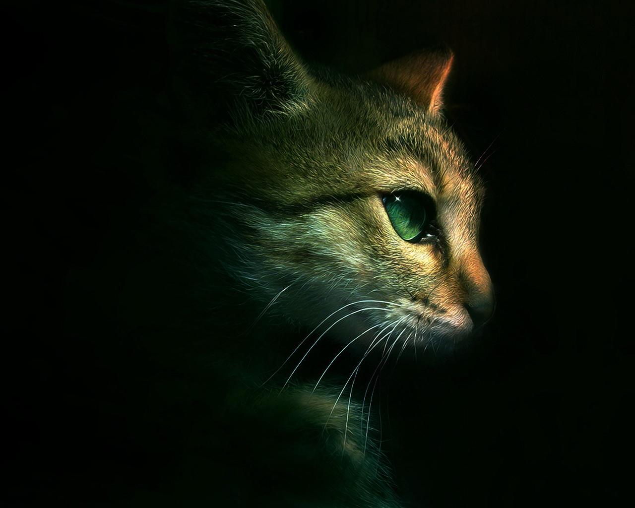http://4.bp.blogspot.com/_YPTAJEKG950/TJAxDHPFH0I/AAAAAAAAAM0/q9KhmPU4pqI/s1600/gato_ojos_verdes_wallpaper.jpg