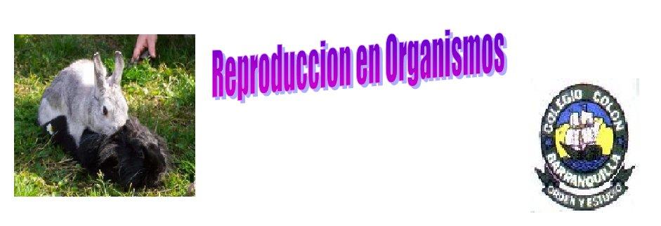 Reproduccion En Los Organismos