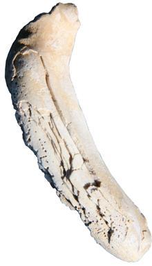 Artefactos de Conchas