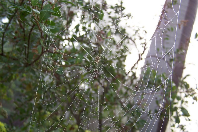 [web+de+dew.jpg]