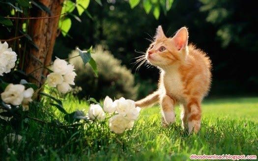 Green Garden Cat