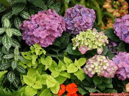 tropical flowers garden