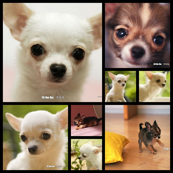 wallpapers dogs. makeup Cats, Dogs Wallpapers