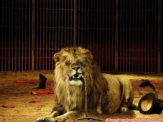 the lion has eaten