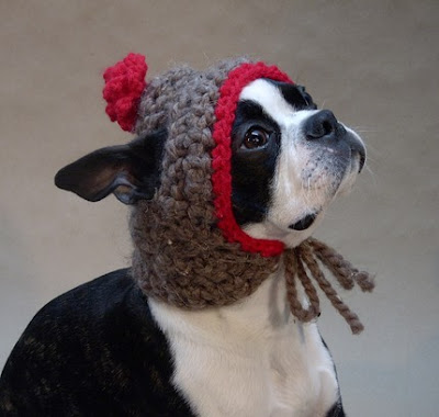Knitting Patterns For Dogs Hats : Knit Hat For Dog Free Pattern images