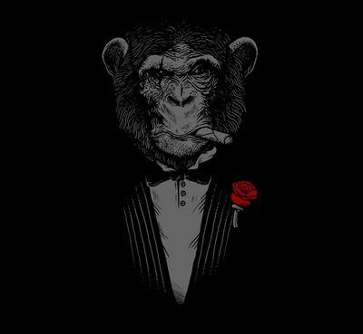 chimp behavior essay