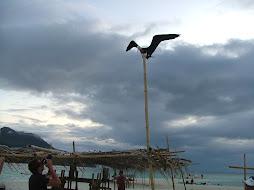 Juan Livingston Dream Bird