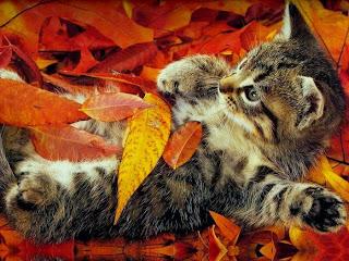 Осеннее эссе