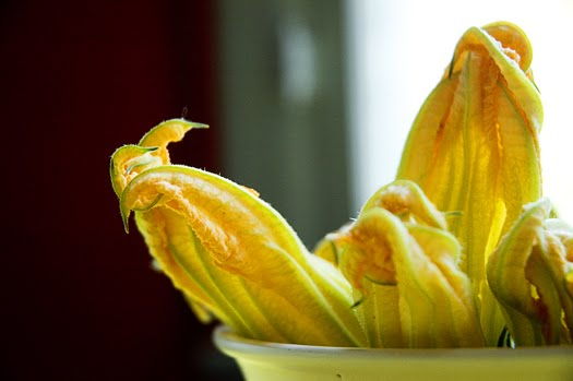 squash blossoms